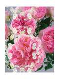 Adorned With Roses I Photographic Print by Alaya Gadeh