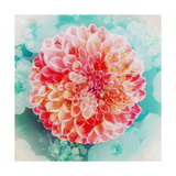 Lonesome Dahlia Photographic Print by Alaya Gadeh