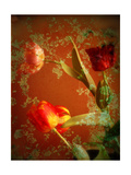Ornamental Tulips Photographic Print by Alaya Gadeh