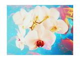 White Orchid Fishes Photographic Print by Alaya Gadeh