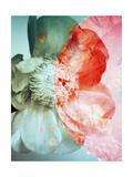 Poppy Poeny Moon V Posters by Alaya Gadeh