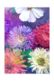 Multicolor Blossoms I Photographic Print by Alaya Gadeh