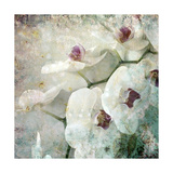 Hint Of Orchid III Photographic Print by Alaya Gadeh