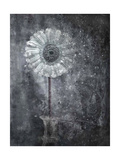 Daisy Illusion Photographic Print by Alaya Gadeh