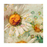 Soft Daisy Composition Photographic Print by Alaya Gadeh