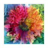 Rainbow Blossom Photographic Print by Alaya Gadeh