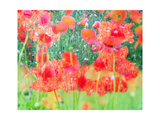 Poppy Moon Illusion Photographic Print by Alaya Gadeh