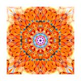 Orange Blossom Mandala Reproduction photographique par Alaya Gadeh