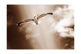 Birds At The Dunes I Photographie par Alaya Gadeh