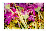 Pink Gerber Daisy Impression Photographic Print by Alaya Gadeh