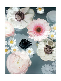 Pure Blossoms I Photographic Print by Alaya Gadeh