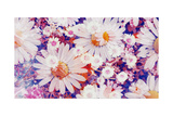 Daisy Summerparty II Photographic Print by Alaya Gadeh