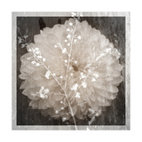 Dahlia Poetic Photographic Print by Alaya Gadeh
