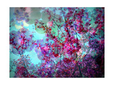 Spring Tree Impression XI Photographic Print by Alaya Gadeh