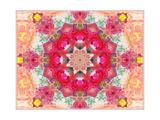Entchanting Poeny Mandala No 5 Pôsters por Alaya Gadeh