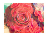 Red Rose Synphony No 2 Photographic Print by Alaya Gadeh
