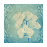 Orchid Blues II Photographic Print by Alaya Gadeh