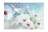 White Poetic Orchid Photographic Print by Alaya Gadeh