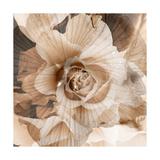 Rose Emotion Photographic Print by Alaya Gadeh