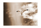 Birds From The Dunes Photographic Print by Alaya Gadeh