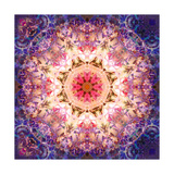Dried Flower And Leaf Mandala Ornament No 7 Photographic Print by Alaya Gadeh