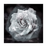 Grey Beauty Photographic Print by Alaya Gadeh