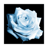 Light Blue Rose Photographic Print by Alaya Gadeh