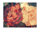 Rose Couple Photographic Print by Alaya Gadeh