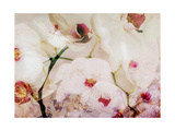 Orchids Poetry II Photographic Print by Alaya Gadeh