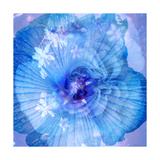 Ocean Blues Photographic Print by Alaya Gadeh