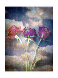Unfading Love Photographic Print by Alaya Gadeh