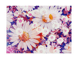 Daisy Summerparty Photographic Print by Alaya Gadeh