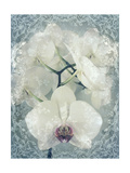 Poem To A White Orchid II Photographic Print by Alaya Gadeh