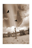 Birds Of The Dunes II Photographic Print by Alaya Gadeh