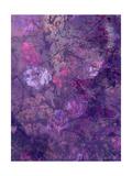 Purple Flower Forest Plakater af Alaya Gadeh