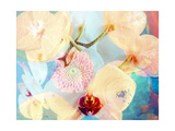 Summer Orchid Dream Photographic Print by Alaya Gadeh