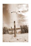 This Way - Dans cette direction Photographie par Alaya Gadeh