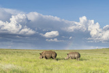 White Rhinoceros, Kenya Photographic Print by Martin Zwick