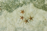 Four Knobby Sea Stars and Small Fish, Kapalai, Malaysia Photographic Print by Ali Kabas