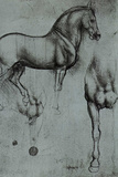Leonardo da Vinci (Horse trials) Poster Posters by  Leonardo da Vinci