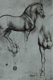 Leonardo da Vinci (Horse trials) Prints by  Leonardo da Vinci