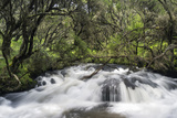 River in Aberdare National Park, Just before Karura Falls, Kenya Photographic Print by Martin Zwick