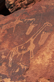 Ancient Rock Etchings, Twyfelfontein, Damaraland, Namibia Photographic Print by David Wall