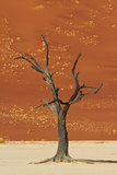 Dead Tree, Sand Dunes, Deadvlei, Namib-Naukluft National Park, Namibia Photographic Print by David Wall