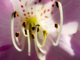 Extreme Close-Up of Flower Stamen Photographic Print by Matt Freedman