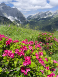 Hairy Alpenrose in the Karwendel Mountains, Austria Photographic Print by Martin Zwick