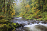 Tanner Creek, Columbia River Gorge, Oregon, USA Photographic Print by Jamie & Judy Wild