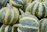 American Tondo Pumpkins, California, USA Photographic Print by Cindy Miller Hopkins