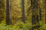 Forest Scenic, Admiralty Island, Tongass National Forest Alaska, USA Photographic Print by  Jaynes Gallery