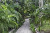 Pathway, Hemingway House, Hemingway Museum, Finca Vigia, Havana, Cuba Photographic Print by Adam Jones